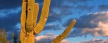 rent AZ: tucson