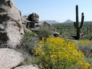 apts arizona: arizona
