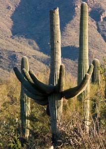 apts arizona: az cactus