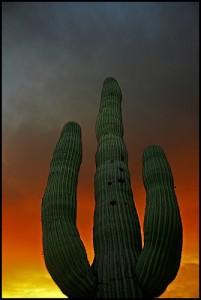 apts arizona: cactus