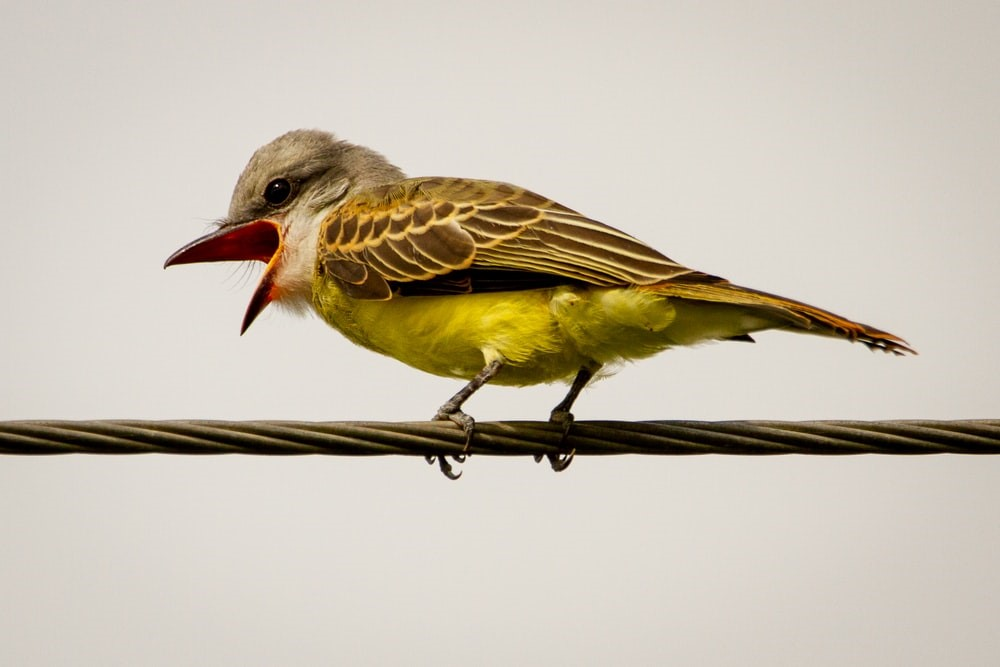 brown and yellow bird on brown wooden stick